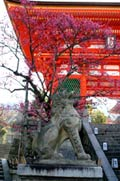 Temple Kiyomizu - Kyoto