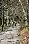 Path of Philosophy - Kyoto