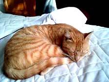 Andromède qui dort