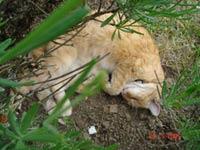 Le chat du jardin !!