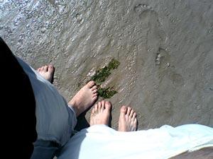 Balade à quatre pieds