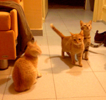 Les chats d'Ein Gedi