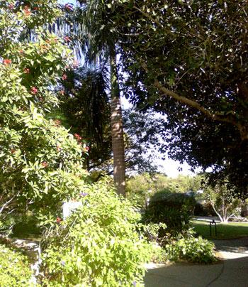Végétation kibboutz d'Ein Gedi