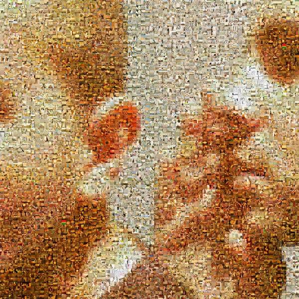 Mosaic time