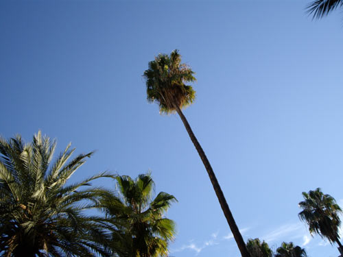 Palmiers dans le centre de Barcelone