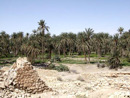 Des palmiers dans le désert
