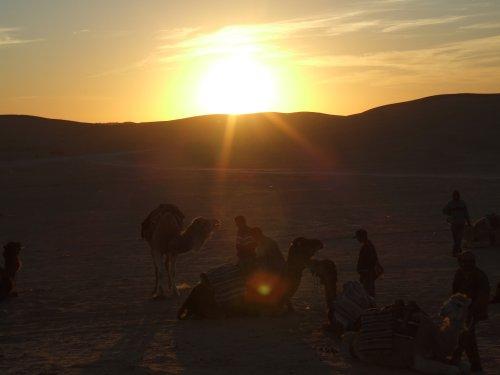 Dromadaires dans le coucher du soleil