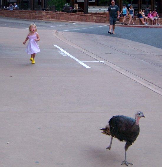 Une petite fille court après un dindon - Zion National Park