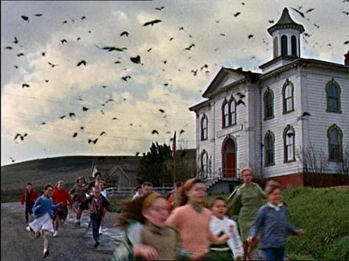 Birds - Bodega Bay School