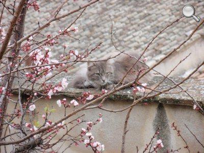 Détail du chat sur le mur