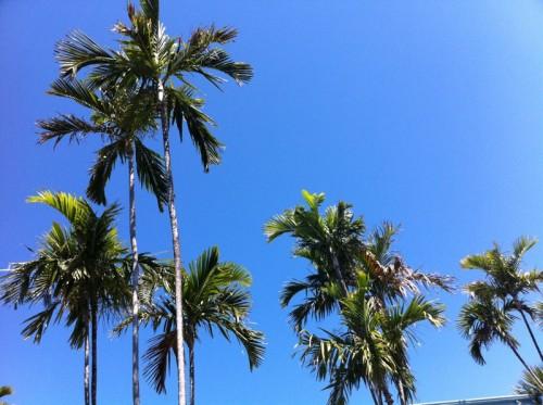 Palmiers - vue du resort gay de Fort Lauderdale