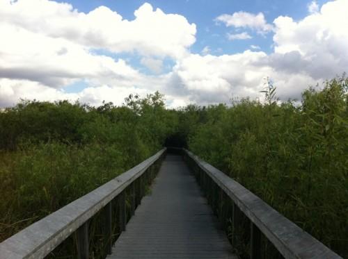 Parc des Everglades - promenade dans les bosquets