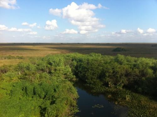 Parc des Everglades - Vue de la rivière