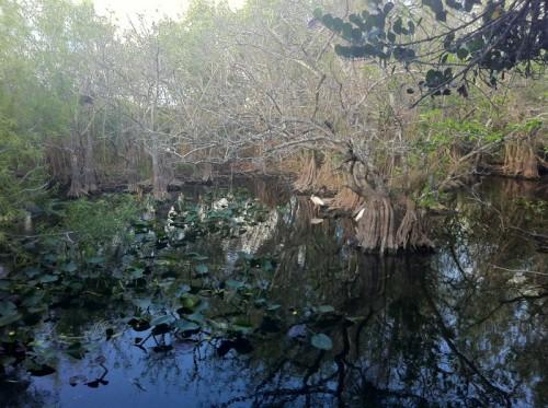 Parc des Everglades - promenade dans le parc
