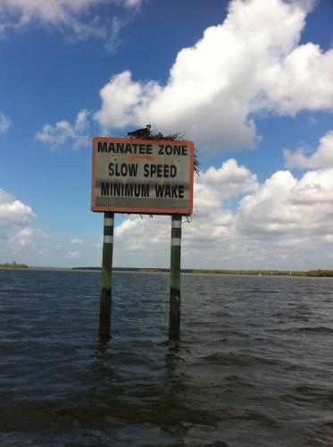 Parc des Everglades - zone de lamantin