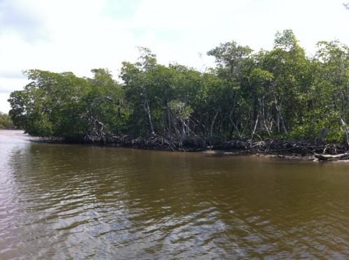 Parc des Everglades - Promenade dans la mangrove