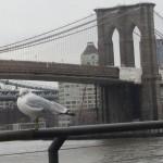 New York - Vue du pont de Brooklyn du Pier 17