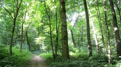 Vue des bois de Berville (Val d'Oise) - Vexin français