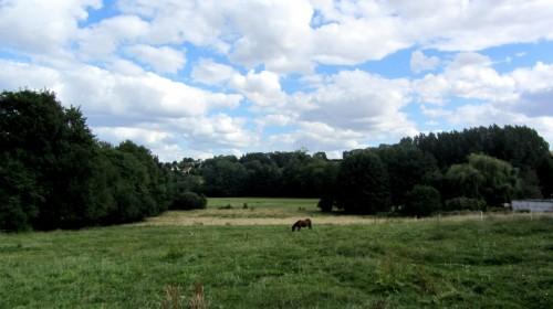 Vaches de Berville (Val d'Oise) - Vexin français
