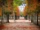 Tuilerie en Automne