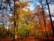 Fin d'automne au bois de Vincennes
