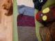 Ma première écharpe maison