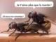 Dialogue romantique (chez les mouches)