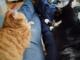 Canapé de jambes pour chattes